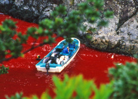 news_090911_1_1_Taiji_dolphin_slaughter_in_2003