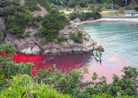 news_090911_1_2_Taiji_dolphin_slaughter_in_2003