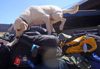 news_091125_1_2_police_dog_searching_bags